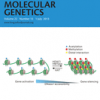 Increased genome instability in human DNA segments with self-chains: homology-induced structural variations via replicative mechanisms